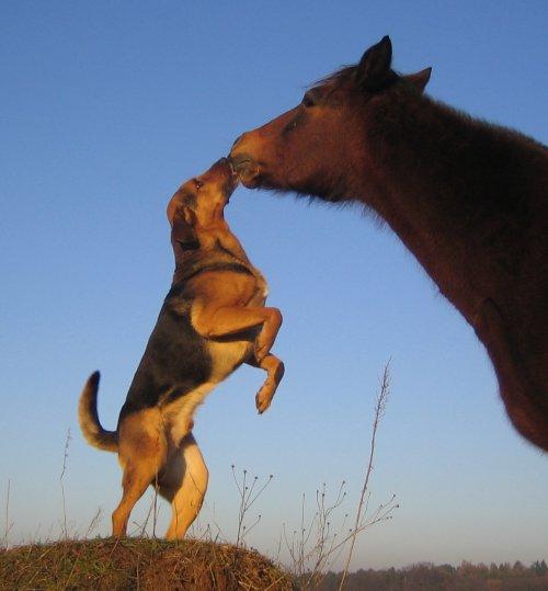 In der Tierarztpraxis und direkt vor Ort