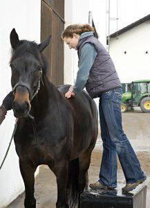 Dr. Niedermaier, FTA Pferde