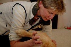 Dr. Trustaedt Behandlung Hund