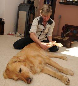 Mit helfenden Händen vor Ort: Die ganzheitliche Tiermedizinerin Dr. Marion Trustaedt