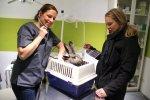 Tierärztin Dr. Ariane Böttcher-Künneke eröffnete Kleintierpraxis auf Klinikniveau im Heidekreis