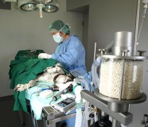Dr. Ganser_OP_Hund