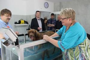 tierarzt physiotherapie hund