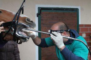 Tierarzt Poap Behandlung Zähne