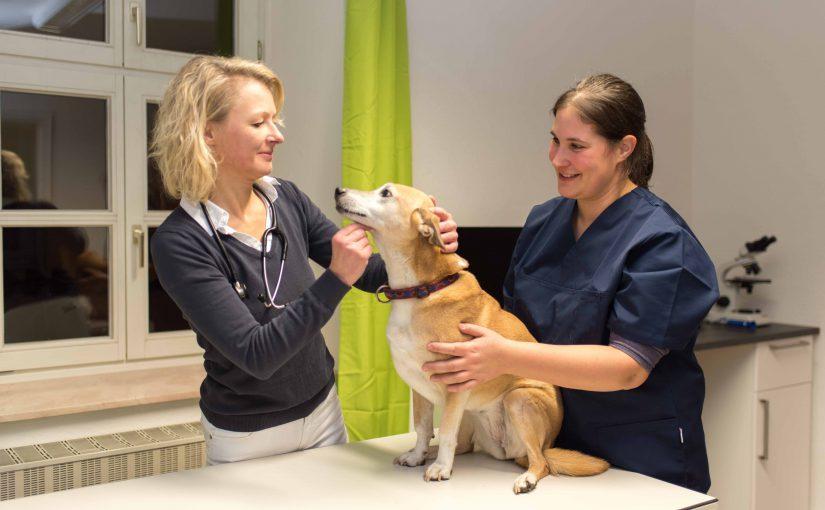Dr. Sylvia Staschen eröffnet eigene Tierarztpraxis für Klein- und Heimtiere in Fürstenfeldbruck