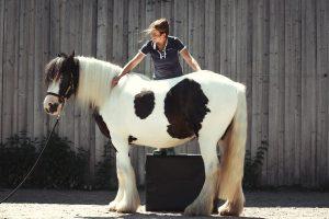 Chiropraktik Pferde - Tierarztpraxis Dippert