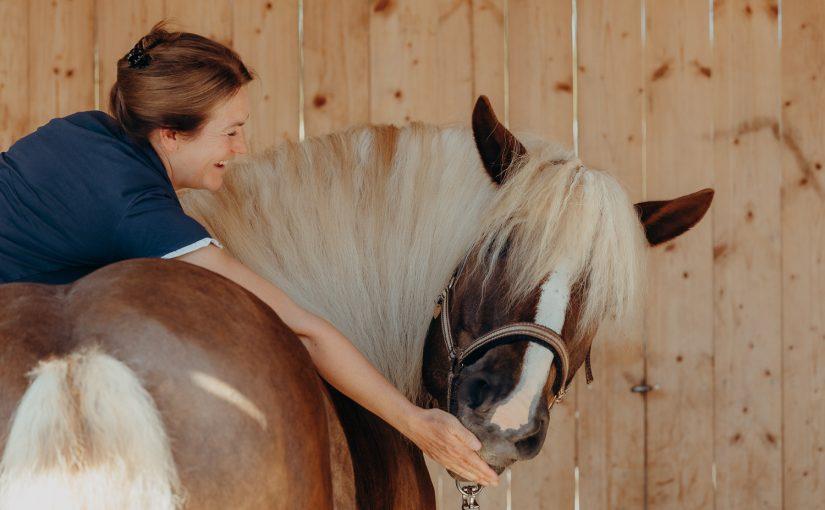 Chiropraktik beim Pferd